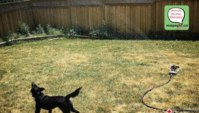 Wordless Wednesday: Storm vs The Sprinkler